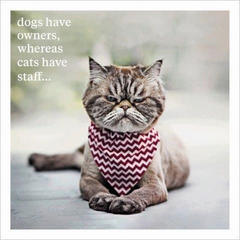 Dogs Have Owners, Cats Have Staff